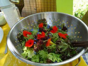 Salat Brennnessel