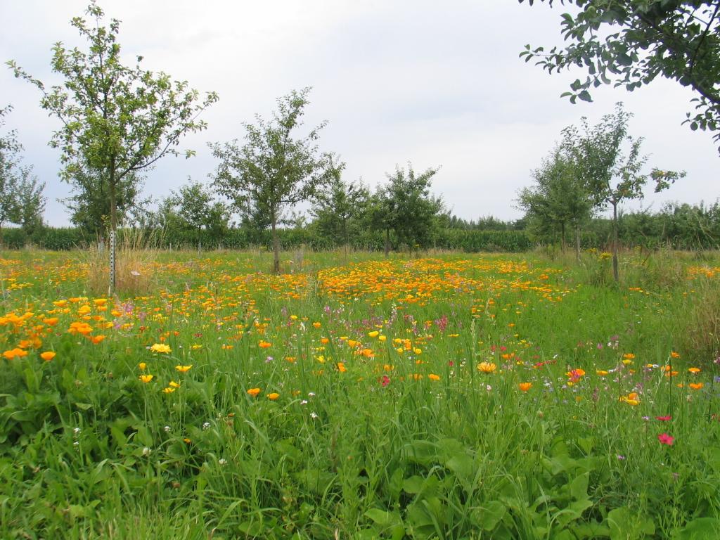 Blumenwiese im Generationenpark .jpg
