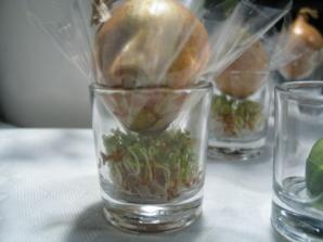 Kresseanzucht im Schnapsglas