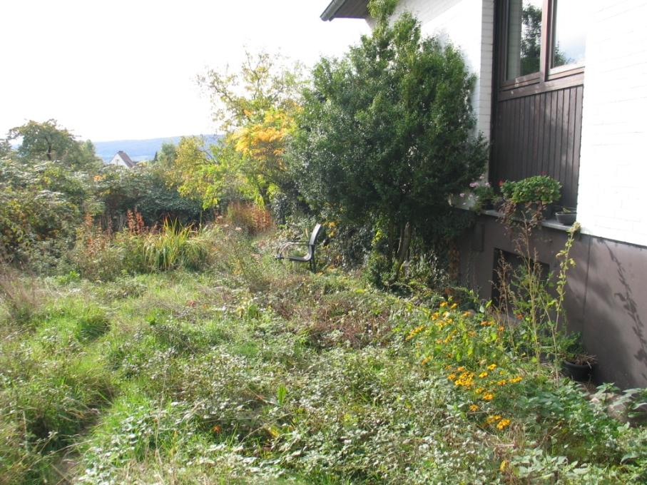 Gartenausschnitt mit Glyzinie und Tagetes im Herbst