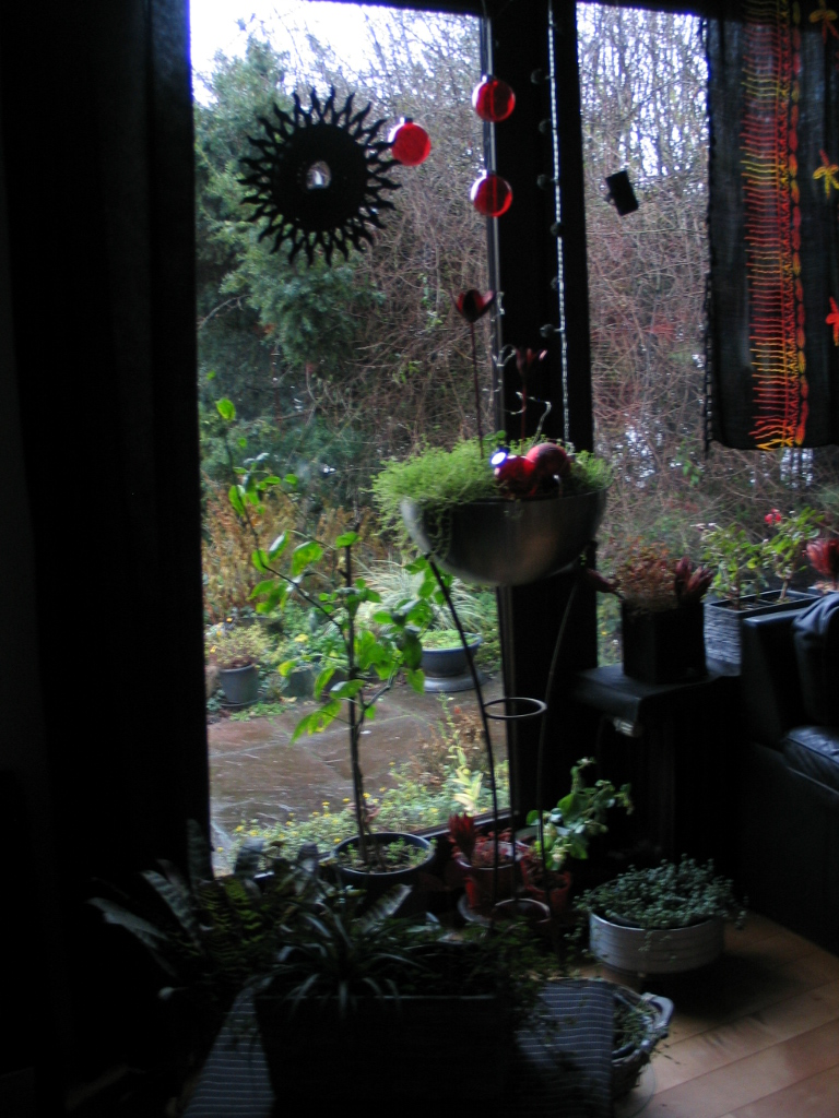 mehrjährige Chilipflanze im weihnachtlichen Zimmer