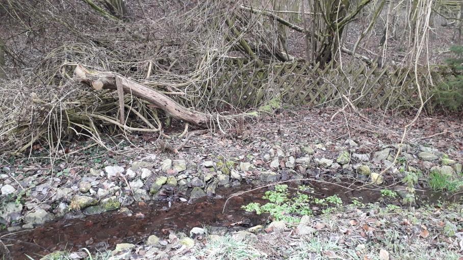 verwunschener Brunnenkressewald Bachschleife