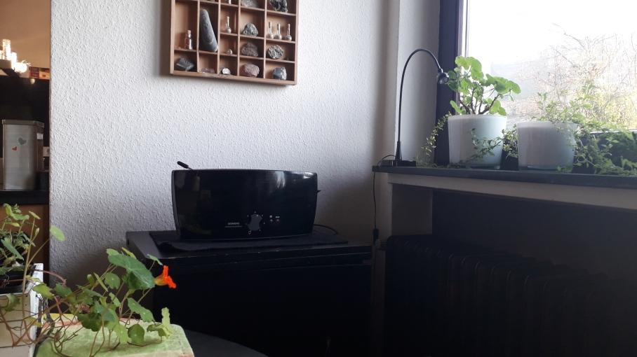 Kapuzienerkresse auf dem Esstisch